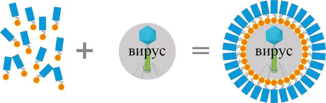 Олигопептиды википедия ннпцто санкт-петербург пептиды