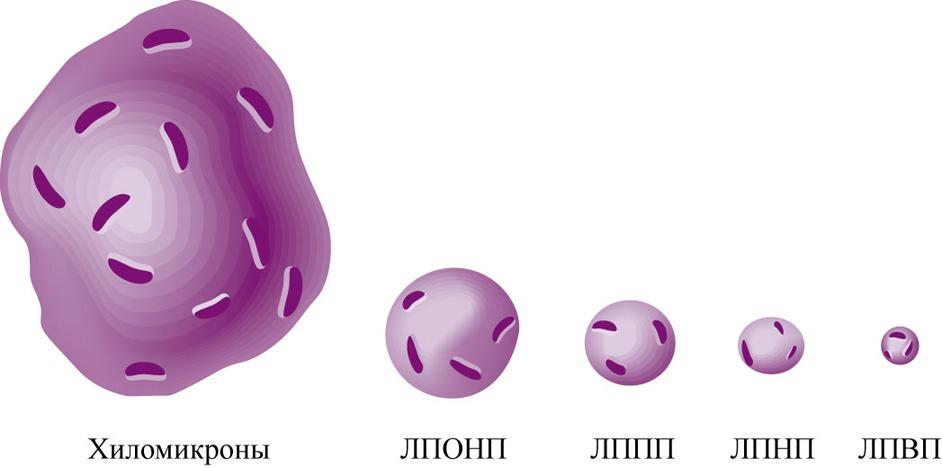 Липопротеин низкой плотности фото