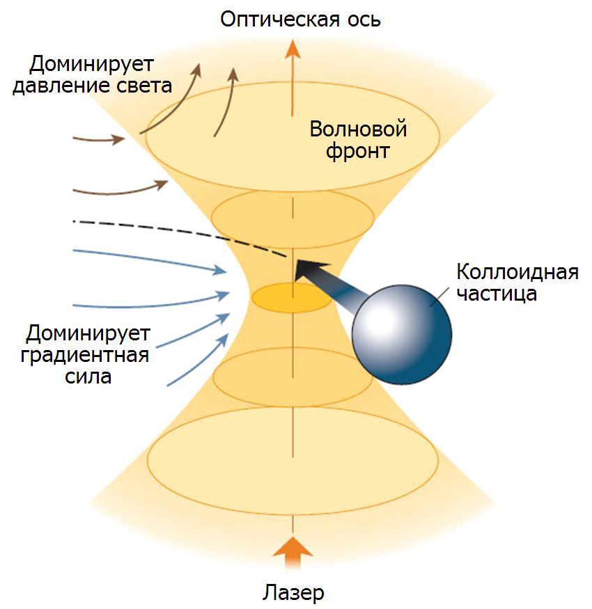 Картинки по запросу МАНИПУЛЯЦИЯ МИКРООБЪЕКТАМИ